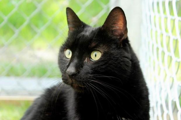Piękny koci towarzysz - Hades, wciąż ma nadzieję, że znajdzie swojego nowego opiekuna...
