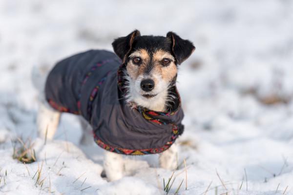 Niektóre psy potrzebują dodatkowej ochrony zimą.