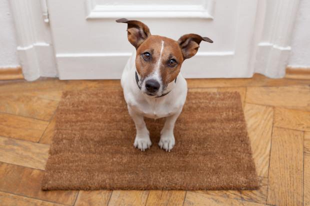Wynajem mieszkania z psem? Nie!