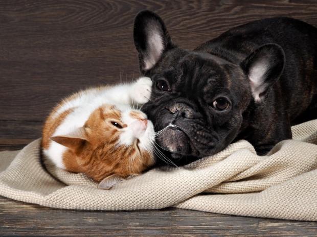 Pomagać zwierzakom można na wiele sposobów, m.in. biorą udział w aukcjach charytatywnych.