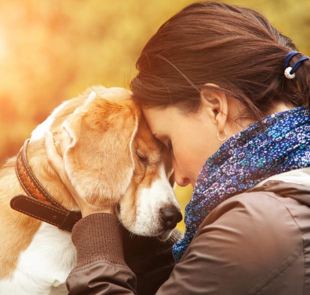 Podobnie jak w przypadku ludzi - czas leczy rany, pamiętajmy jednak, że zwierzakowi nie możemy wytłumaczyć zaistniałej sytuacji, uspokoić czy zapewnić o jego bezpieczeństwie.