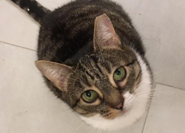Obcięty czubek ucha u bezdomnego kota to zazwyczaj ważna informacja.