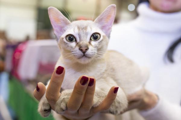 Takie wystawy nie są do końca komfortowe dla kotów, ale obecność ukochanej pani na pewno pozwala im poczuć się bezpiecznie.