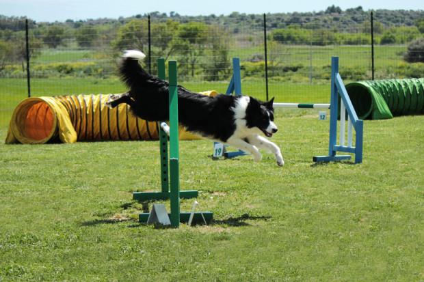 Agility to jedna z dyscyplin, która wyjątkowo podoba się psom.