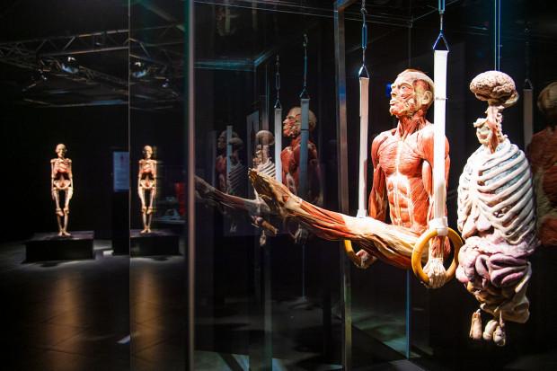 Na wystawie znajdziemy wiele eksponatów przedstawionych w ruchu.