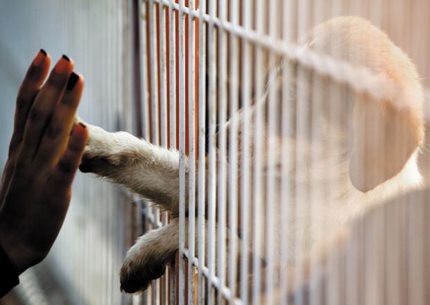 Większość środków przeznaczona jest na działanie schroniska dla zwierząt.