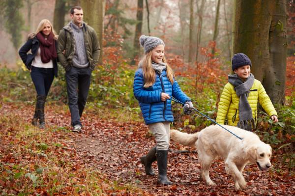 Sprawowanie kontroli nad psem podczas spacerów w lesie jest szczególnie ważne wiosną.