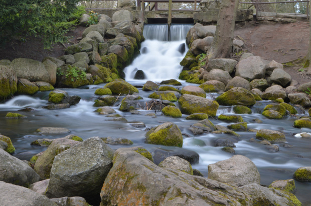 Potok w Parku Oliwskim.