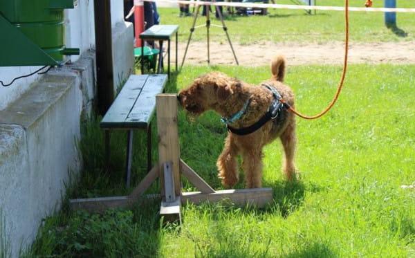 Praca węchowa wykorzystuje naturalne predyspozycje psa.