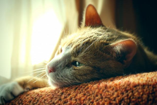 Koty to rozumne i wrażliwe stworzenia, które tylko pozornie nonszalancko podchodzą do życia i tego, co się wokół nich dzieje.