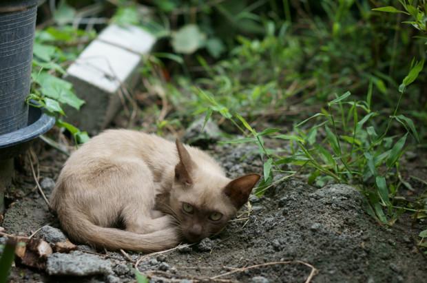 Koty wolno bytujące w okolicach osiedli są chronione prawnie przez miasto.