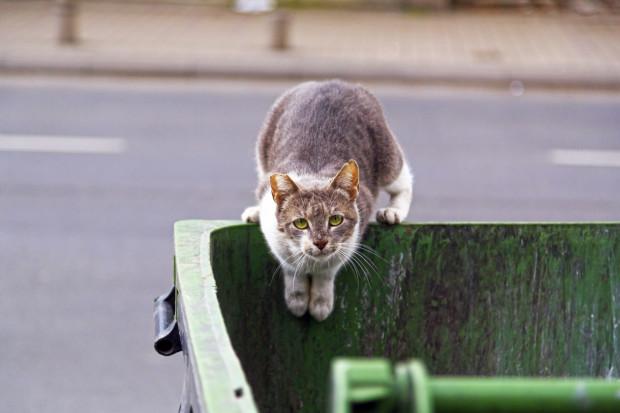 Koty polują, bo tak podpowiada im instynkt - ich łowność nie zależy od ich poczucia głodu.
