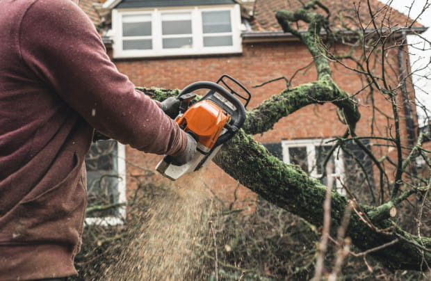 Jeśli obwód pnia na wysokości 5 cm nad ziemią przekracza 50 cm (65 lub 80 cm w przypadku kilku gatunków drzew) to jego wycięcie będzie wymagało zgłoszenia do urzędu.