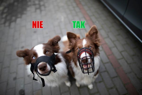 Po lewej kaganiec weterynaryjny, który nie pozwala psu się chłodzić. Po prawej kaganiec fizjologiczny, właściwy, bezpieczny, pozwala psu dyszeć i pić wodę