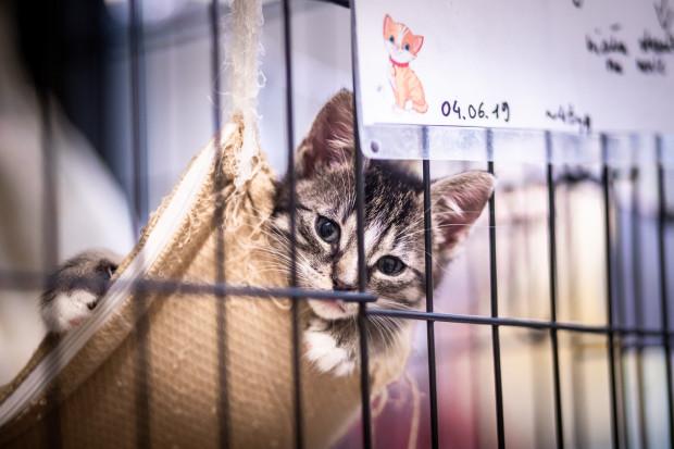 Kociak czekający na nowy dom. Przebywa w schronisku Ciapkowo