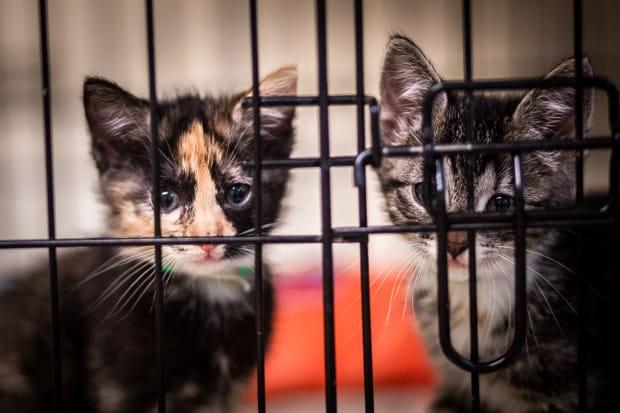 Małe koty powinny jak najkrócej przebywać z schronisku, są tam narażone na choroby i stres. Im szybciej znajdą nowy dom, tym lepiej.