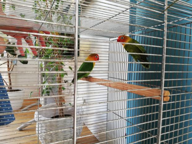 Ptak został złapany i zabezpieczony już 21 czerwca, jednak przez niemal 3 tygodnie nie było wiadomo, do kogo należy.