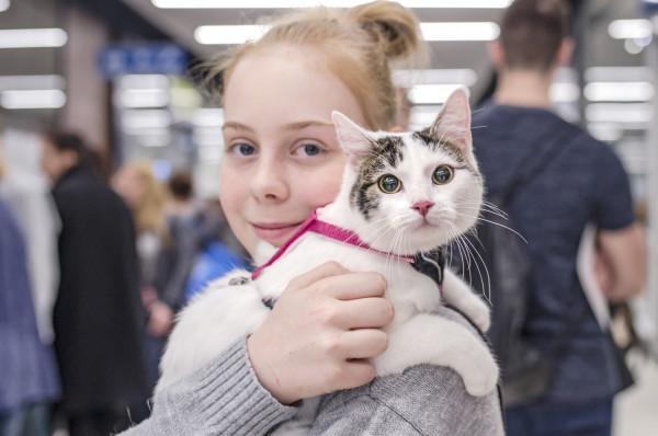 Na sopockim Hipodromie odbędzie się Jubileuszowa Wystawa Kotów Rasowych.