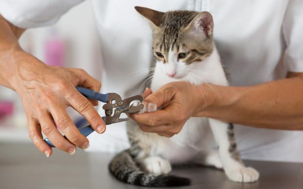 Nie licz, że kot z obciętymi pazurami przestanie odczuwać potrzebę drapania, bo tak się nie stanie, wręcz przeciwnie: będzie drapał jeszcze więcej.