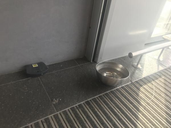 Do hipermarketu nie wolno wchodzić z psami, ale podczas upałów w środku obok skrzynki z trutką na gryzonie postawiono miskę z wodą dla czworonogów.