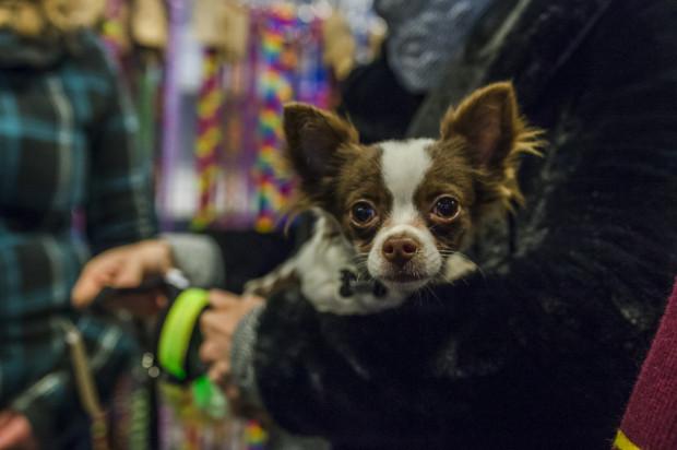 W niedzielę w Sali Koncertowj Portu Gdynia odbędzie się kolejna edycja targów dla zwierzaków Pupilove.