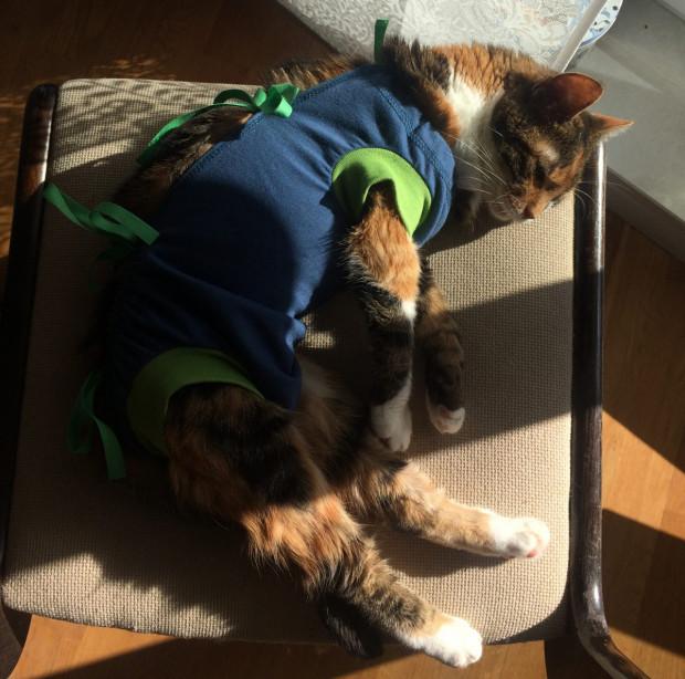 """Bywa, że kotce po zabiegu trzeba założyć specjalny kubraczek, który uniemożliwia wylizywanie rany. To jednak rzadkość, jeśli weterynarz kastruje kotkę """"z boku"""" zamiast na brzuchu (takie cięcie jest znacznie mniejsze i szybko się goi)."""