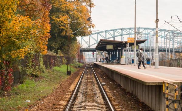 Drzewa na przystanku Gdańsk Zaspa rosną nie tylko w bliskim sąsiedztwie szyn, ale także ponad siecią trakcyjną. Mimo to nie doszło tutaj do wstrzymania ruchu z tego powodu.