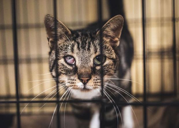 Przebyta w przeszłości choroba pozostawiła u Motylka ślad na prawym oku. Poza efektem wizualnym stan oka nie wpływa negatywnie na codzienne jego funkcjonowanie, mimo to ma trudności ze znalezieniem opiekuna, który zaakceptuje jego wygląd.