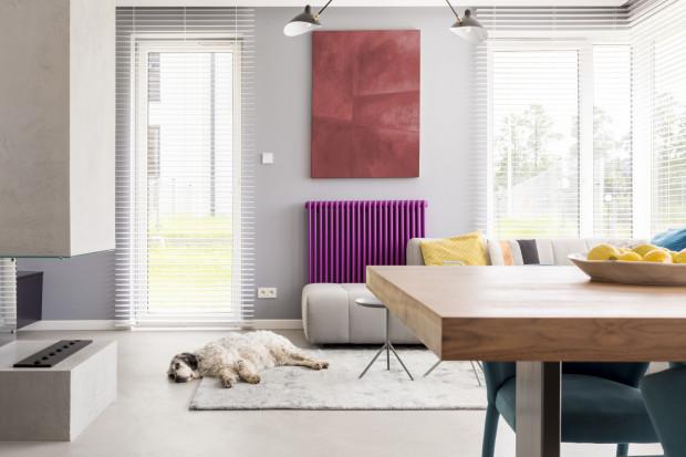Duży pies w małym mieszkaniu - czy to męczenie go?