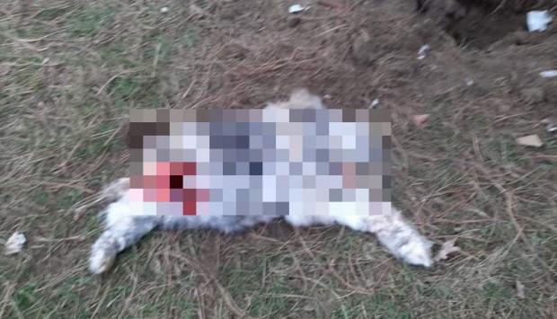 W parku w Gdańsku znaleziono okaleczone zwłoki, prawdopodobnie psa. Uwaga: po powiększeniu wyświetli się zdjęcie bez cenzury.