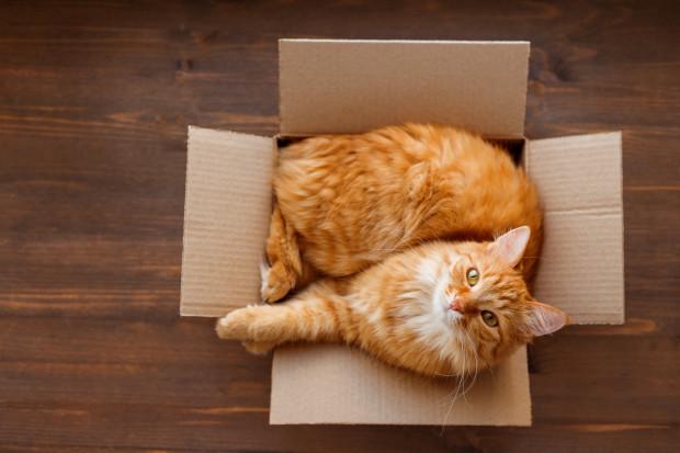Karton. Według kotów to najwykwintniejsze z istniejących rodzajów posłań.