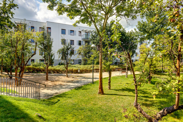 Wolne Miasto. Deweloper w czasie budowy nie wyciął starych drzew owocowych i części rosnących na działce samosiejek. Teraz tworzą one naturalne otoczenie budynków.