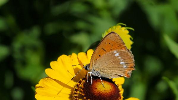 Nie tylko pszczoły skorzystają z naszego ukwieconego balkonu. Inne owady również będą nam wdzięczne.