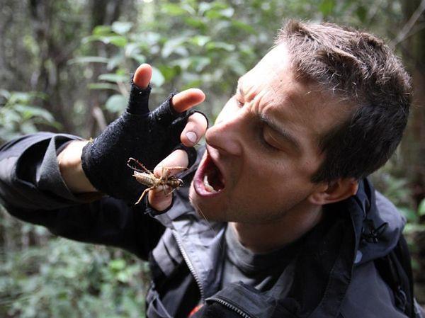 Bear Grylls w swoich programach na temat przetrwania w trudnych warunkach jadł już wiele odrzucających rzeczy, m.in. larwy czy pasikoniki.
