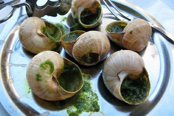 Ślimaki jadalne takie jak winniczki, brązowe czy Gros Gris uznawane są za prawdziwy rarytas i ekskluzywną przystawkę.