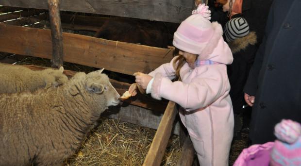 W żywej szopce przy gdańskim kościele Zmartwychwstania Pańskiego dzieci co roku karmią owce.